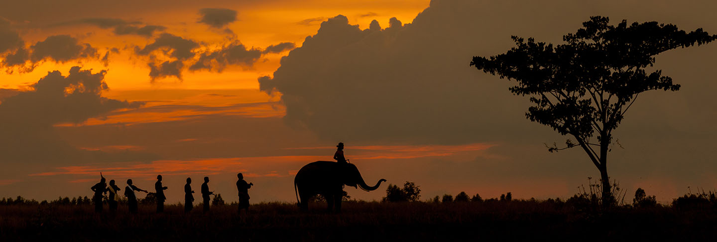 Silhouette of elephant parade and culture