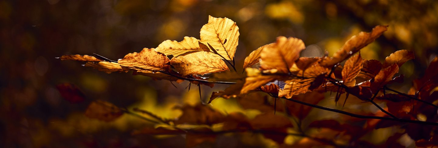 Closeup shot of beautiful golden leaves on a branch with a blurred background