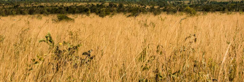 Mateiros, tocantins, brazil: meadow of jalapao lands and large mountain range