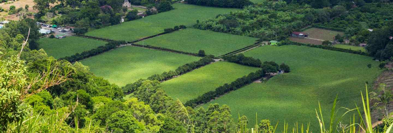 Beautiful green field of costa rican countryside