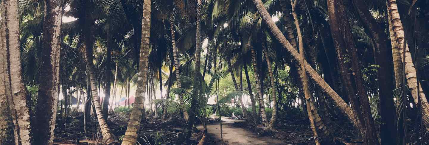 Palms grow side by side in the jungles