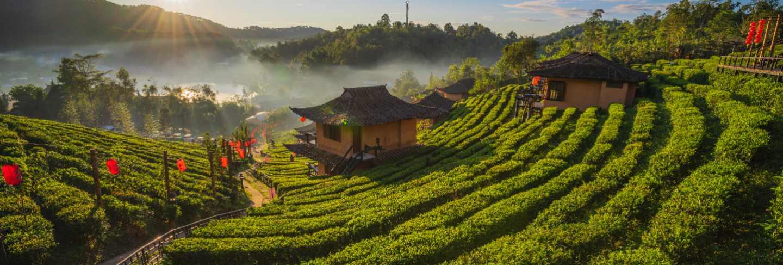 The tea plantation on nature the mountains in ban rak thai, mae hong son, thailand