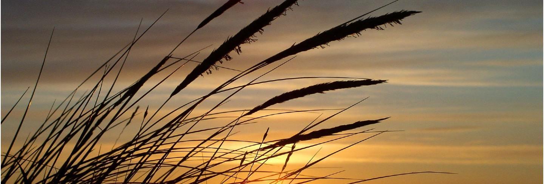 North sea  sky sun denmark grass dune