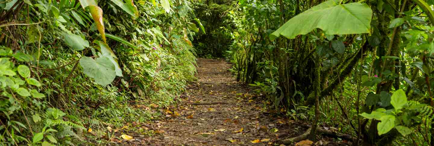 Empty pathway along with green tree in rainforest