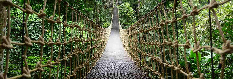 Bridge rainforest suspension bridge, crossing the river, ferriage in the woods