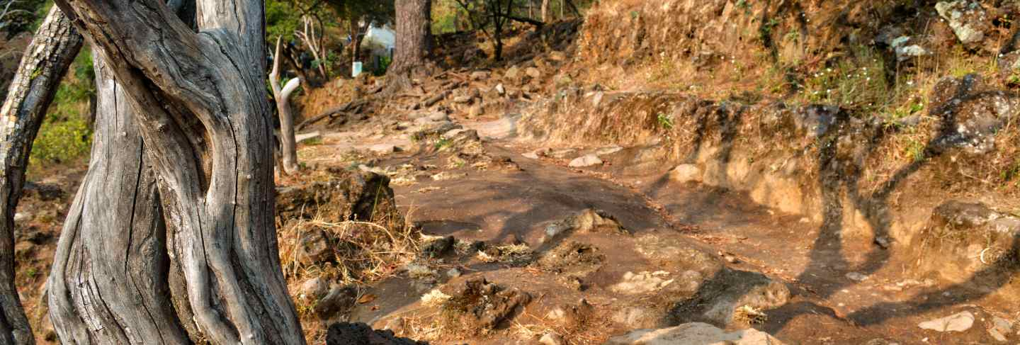 Dirt road and rocks with warm tone. dry wood trunk in front view. beautiful summer view. tepozteco
