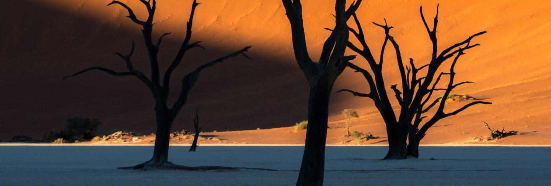 deadvlei-namib-naukluft-national-park-sossusvlei-namibia-dead-camelthorn-trees-against-orange-sand-dunes-with-blue-sky