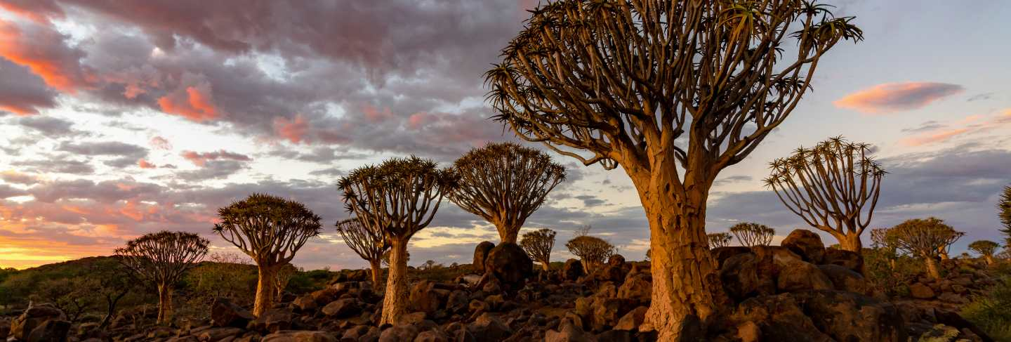view-quiver-trees-forest-with-beautiful-sky-sunset-twilight-sky-scene-keetmanshoop-namibia