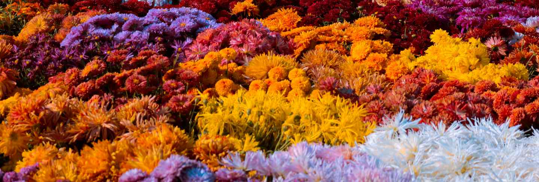 Colorful spring flower garden