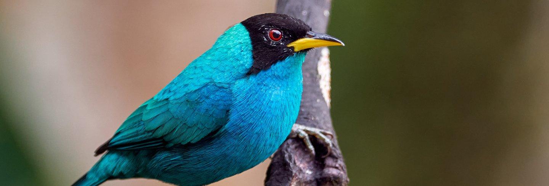 Cyan bird perched on a vertical branch