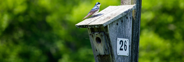 Closeup of two little birds sitting around the birdnest