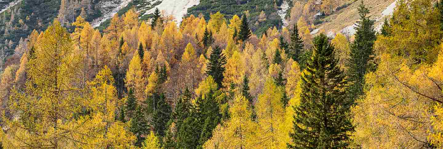 Colorful autumn forest in slovenian alps with huge rocky mountains