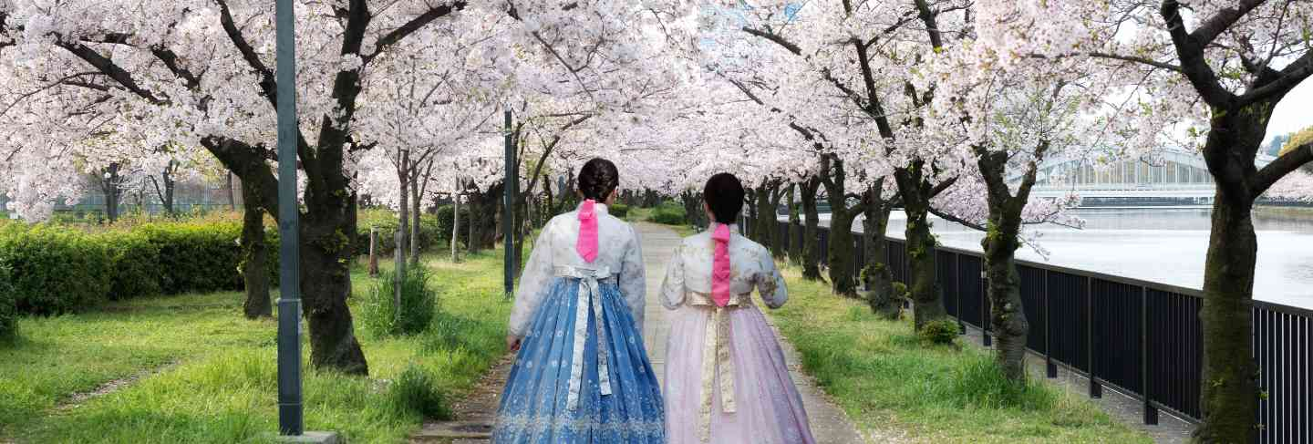Woman wearing korean national dress walking in park and cherry blossom in seoul, south korea
