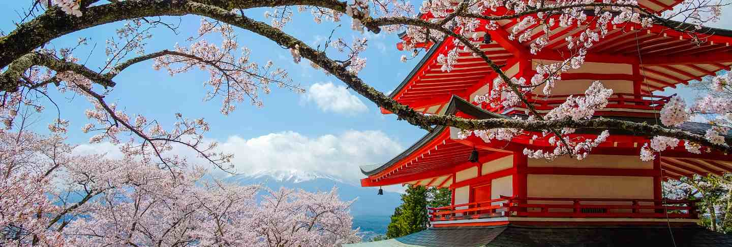 Chureito red pagoda with cherry blossom and mount fuji . spring season at japan