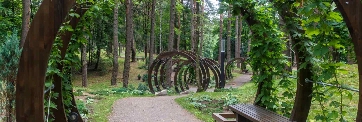 A forest park with large trees and creative benches and arches