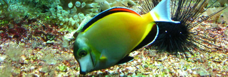 Aquarium in oceanographic museum in mont