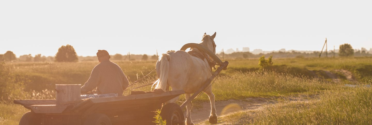 Beautiful white horse harnessed with old wooden cart at meadow. countryside cottage outdoor landscape