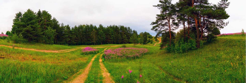 Field road. koltush heights - natural landscape, vsevolozhsky district, leningrad region. Panorama
