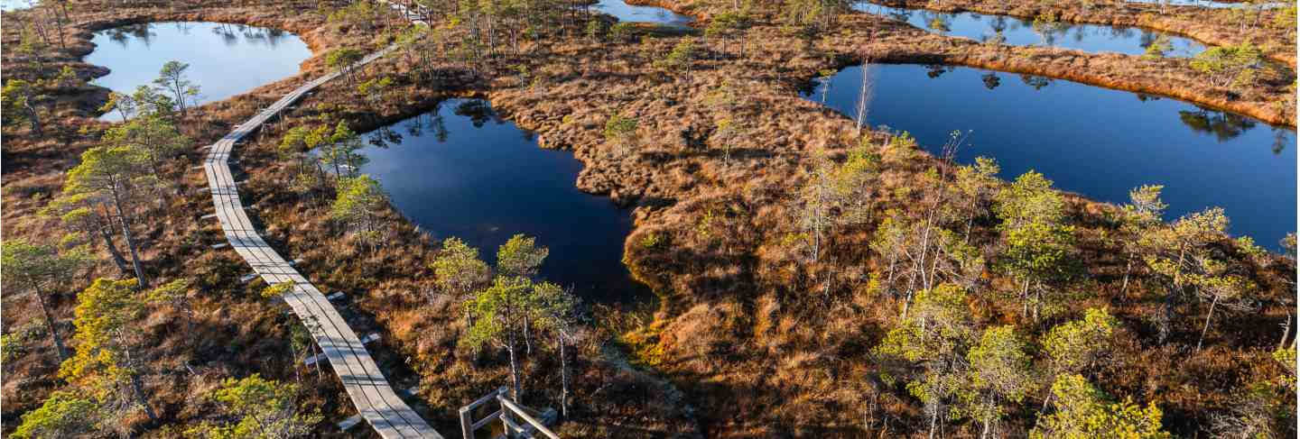 Raised bog in latvia. kemeri national park. Landscape