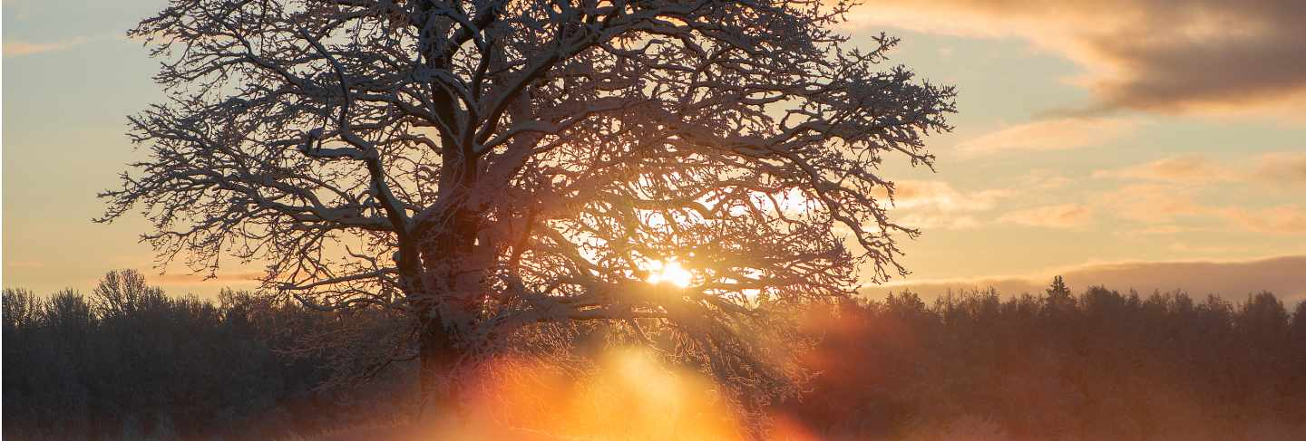 Beautiful rays through the frosty morning oak-trees,winter sunrise view at krimulda,