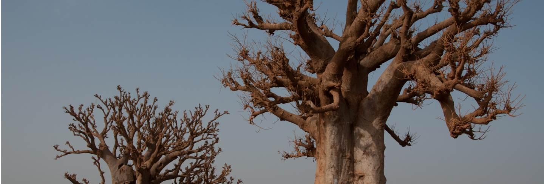 Isla goree senegal, africa Premium Photo