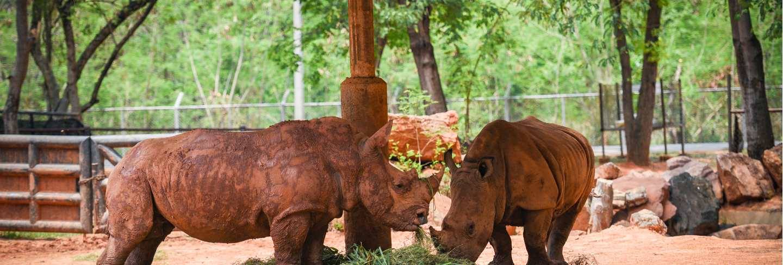 Rhino farm zoo in the national park - white rhinoceros