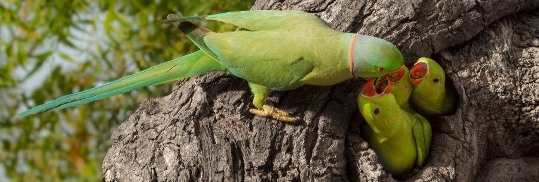 Parrot feeding little