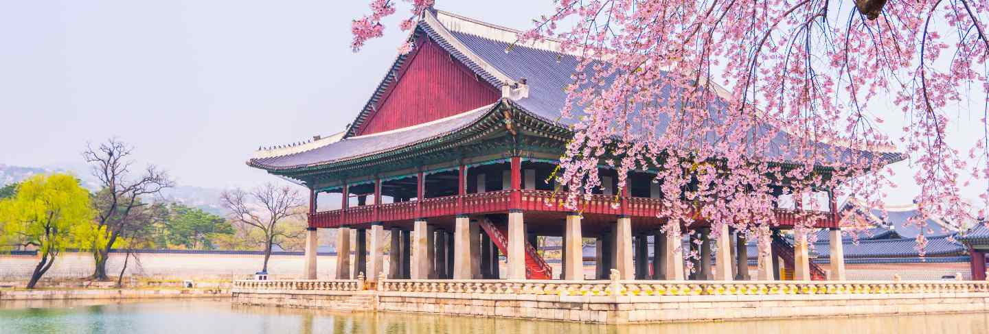 Cherry blossom in gyeongbokgung palace. seoul, south korea