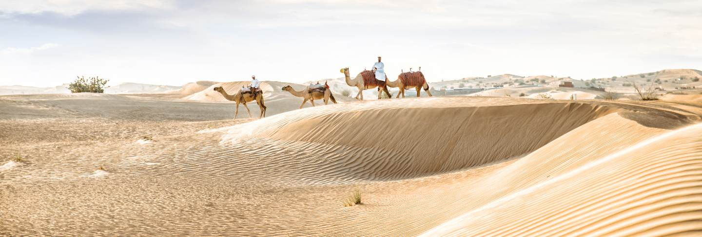 Man wearing traditional clothes, taking a camel out on the desert sand, in dubai