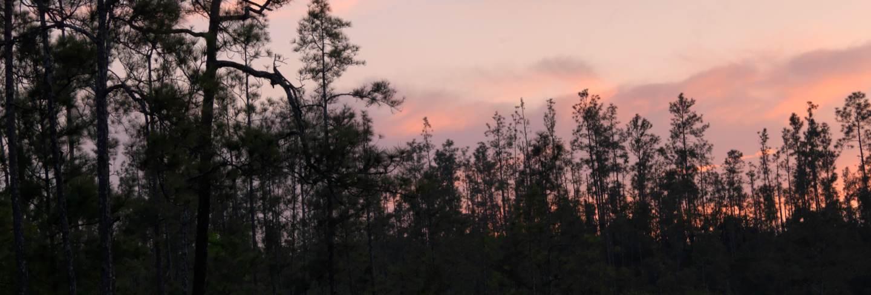 Mountain pine ridge reserve, tropical rain forest