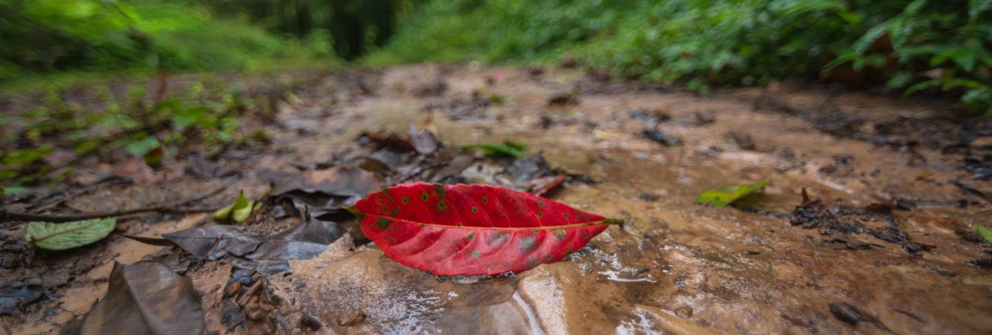 The red leaves that fall in the green forest are blurred.
